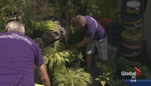 Gardening: Made in the Shade