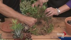 Gardening: Succulent Wreath