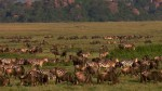 National Geographic showcases the natural world LIVE in the world premiere of 'Earth Live'