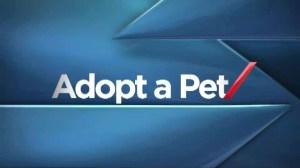 Adopt a Pet: Nov 17