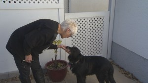 Senior dogs rescue