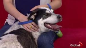 Adopt a Pet: Lola