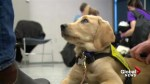 Puppy Power: canines on campus lend a helping paw