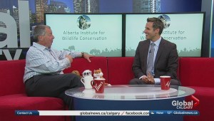 Special fundraiser for Alberta Institute for Wildlife Conservation
