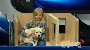 SCARS dog house program