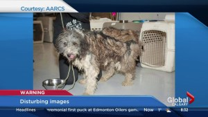 201 dogs seized from Milk River property