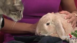 Adopt a Pet: A bunny named Honey & Bailey the cat