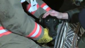 Toronto firefighters rescue dog from vehicle engine block