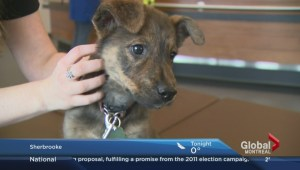 Adopt-A-Pet: Greyson the mix