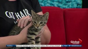 Feline Adoption Partnership a Success