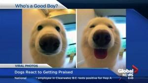 Pets react to praise