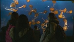 Vancouver Aquarium launches worldwide ocean conservation organization