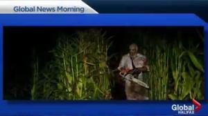 Nights of Gore haunted corn maze