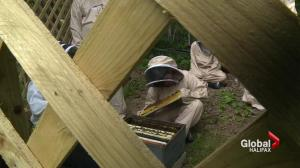 Dartmouth teens become beekeepers for the summer
