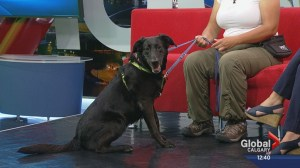 Pet of the Week: Bagheera