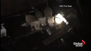 Oklahoma City Fire Department rescues six puppies trapped beneath a house