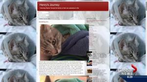 Henry the warrior cat's blog
