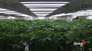 New report warns of problems with legalized pot