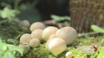 Mushroom Mania! Alberta's fungi flourishing thanks to wet weather