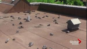 Condo complex roof becomes dumping ground for unscrupulous dog owners