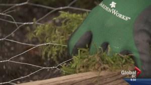 Gardening: Succulent Frame