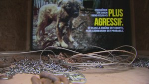 Montreal SPCA holds anti-tethering awareness day