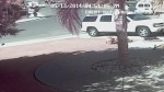 Cat rushes to save boy from dog attack