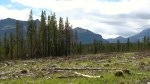 Logging the Ghost: Clear-cutting sparks flood worries