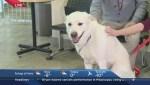 Global News Morning live at the Winnipeg Humane Society