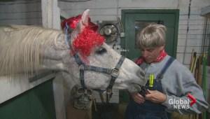 A Horse Tale's haunted barn