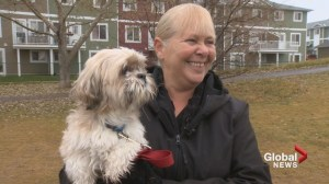 Alberta woman reunited with stolen dog