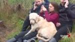 Dog found in Hamilton after ending up on wrong WestJet flight