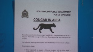 Port Moody neighbourhood worries about cougar