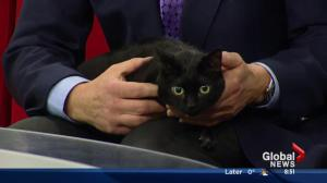 Edmonton Humane Society: Cloe and Neutron
