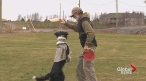 Moncton veteran please with government PTSD service dog trial