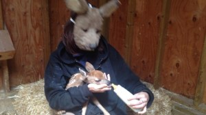 Fostering fawns