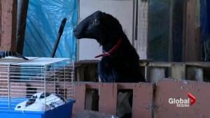 Griffiths Petting Farm closing