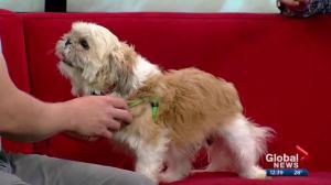 Pet of the Week: Howard