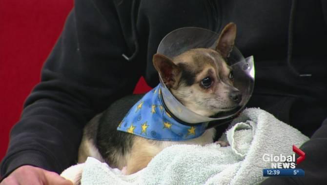 Rescue Dogs For Adoption Calgary