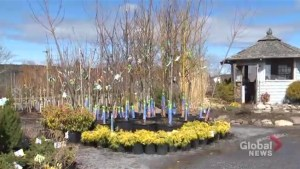 Sunshine, spring temperatures bring out gardeners, golfers