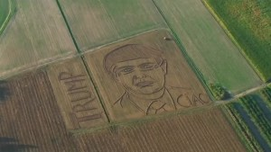 Italian farmer creates giant portrait of Donald Trump in his corn field