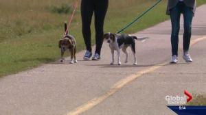 App matches pet owners with local dog walkers