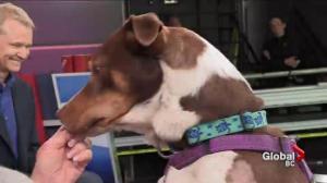 Adopt a Pet: Kash