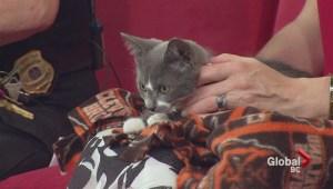 Adopt a Pet: Molly