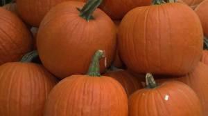 Craze for pumpkin flavoured goods keeps growing