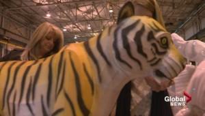 Gil Tucker previews Calgary Zoo's Illuminasia