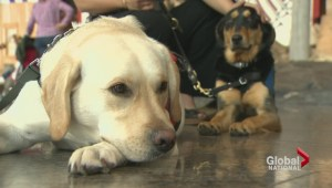 Dogs for PTSD therapy