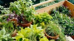 Top tips for growing your own food on a balcony