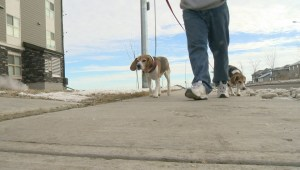 THE POOPRINT. IT'S THE LATEST WAY SOME LANDLORDS ARE GETTING DOG OWNERS TO SCOOP THE POOP.