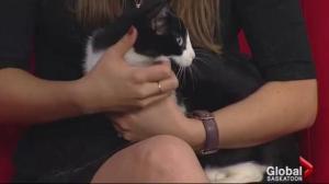 Adopt a Pet: Cora